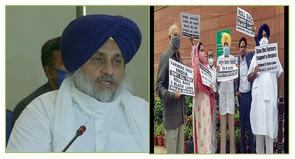 Sukhbir Singh Badal urges all political parties to join hands to demand repeal of three agriculture laws